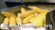 Голограммы, Печать на упаковке, Искусственно выращенная кожа, Консервированная кукуруза