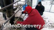Специалист службы отлова бездомных животных
