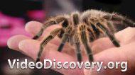 Вы боитесь пауков?