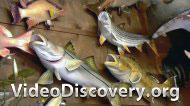 Муляжи рыб, Сигнальные сирены, Упакованные сэндвичи, Подсвечники