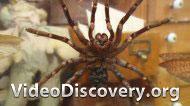 Розыгрыш с пауком