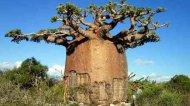 Самые-самые в мире растений